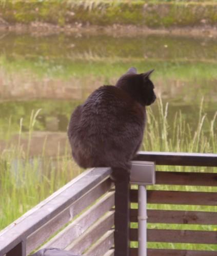 15 mai 2013 Merlin le chat.JPG