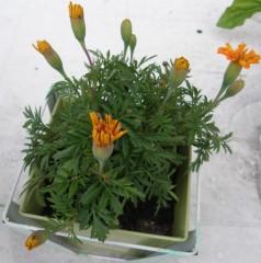 terrasse,plantes