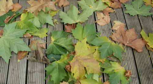 Les feuilles mortes ....JPG