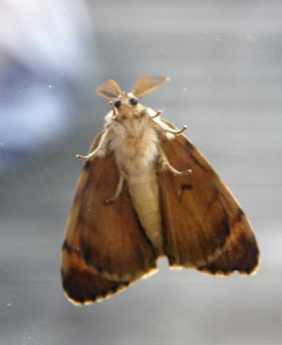 11072017 papillon (3).JPG