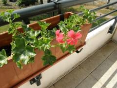 terrasse, plantes