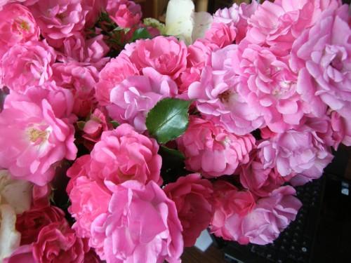 Roses GB.JPG